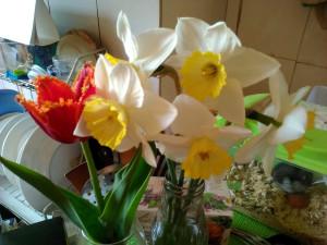 Нарциссы и махровый тюльпан