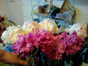 Пионы белые и розовые (много) - июнь 2018