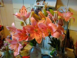 Лилии нежно-розовые 12 июля 2018