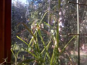 Травы с балкона - бриза - 13 сент. 2018