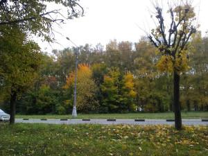 Осень на Проспекте Науки