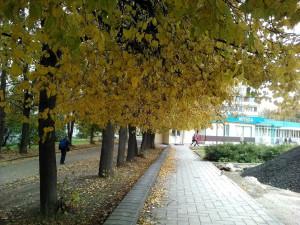 Осенняя липовая аллея по пути в аптеку - 10 окт 2018