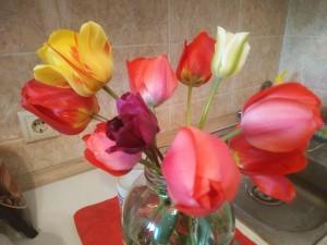 Тюльпаны от Джо - 3 мая 2019