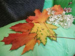 Осенние листья - 3 октября 2019