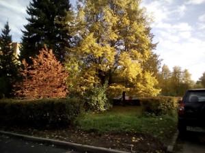 Осень разноцветная - 3 октября 2019