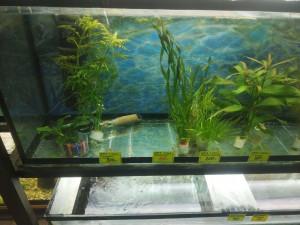 Трава в аквариуме в магазине - 5 ноября 2019