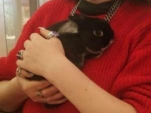 Кролик Йен