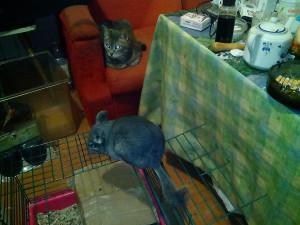 Шуша и Грейс на кухне - 10 февраля 2016