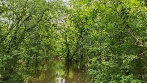 Разлив реки - 9 июня 2020