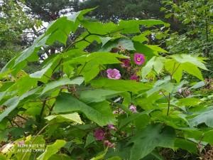 Странное растение - 11 августа 2020