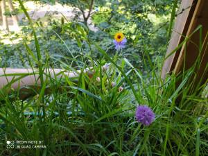 Цветы на балконе - 15 августа 2020