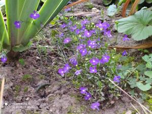 Цветы синие - 4 сентября 2020