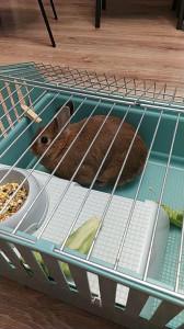 Кролик дома - 29 сентября 2020