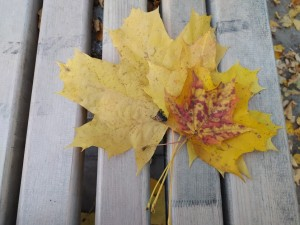 Листья осенние - 3 октября 2020