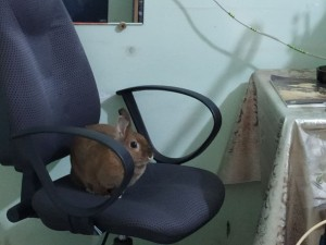 Кролик на кресле - 10 декабря 2020