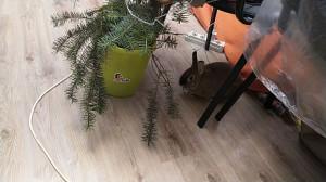 Кролик и елка - 17 января 2021