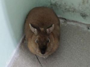 Кролик в углу - 21 января 2021