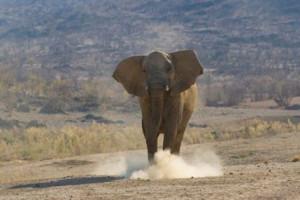 Статья про воронку и слона