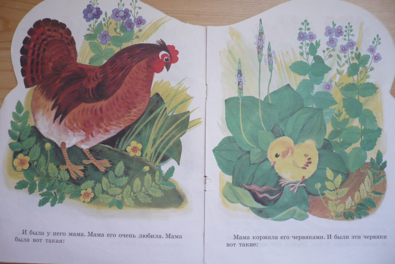 К чуковский цыпленок без картинок