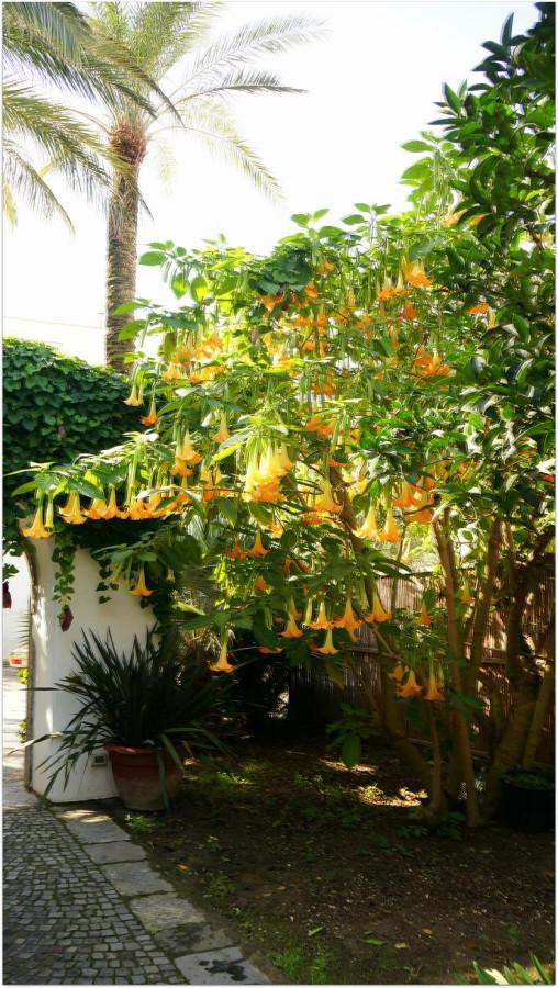 Цветущее в октябре дерево