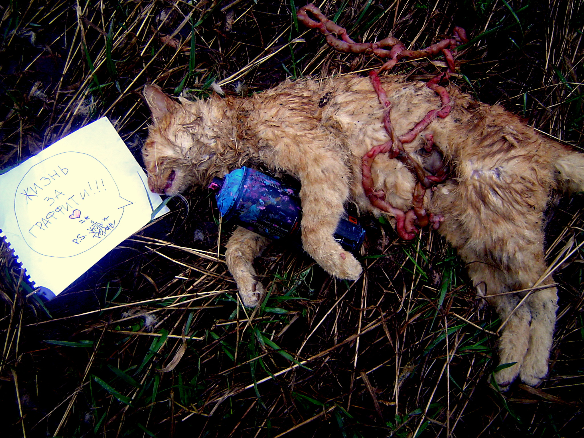 Картинки с убитыми кошками
