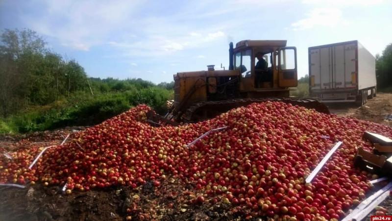 Уничтожение польских яблок