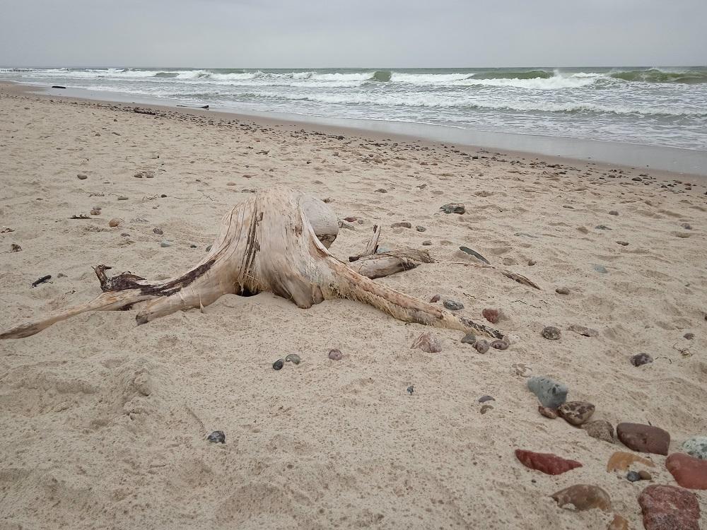 wood-octopus