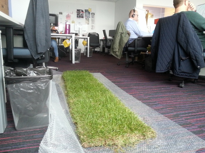 office-grass