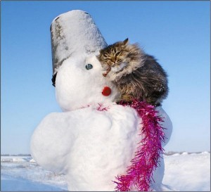 Cats - Kot&Snegovik