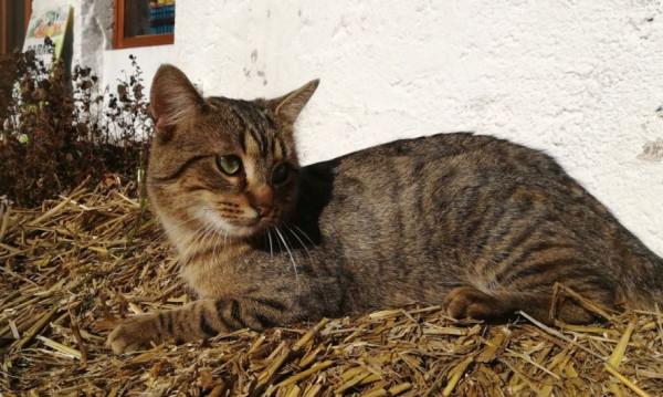 PRAHA - Cat IMG_20180216 (6)