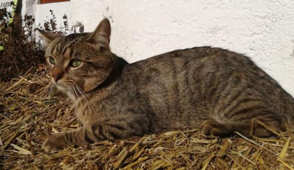 PRAHA - Cat IMG_20180216 (7)