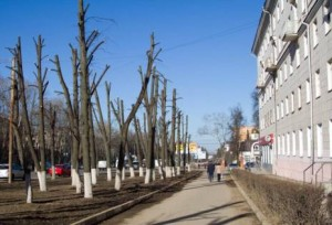 RASKA - trees -vyrubka .8small
