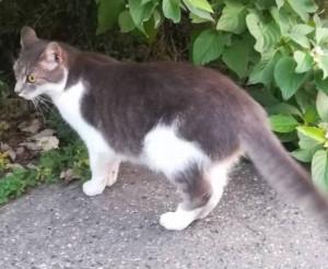 CAT IMG_20180906_191915