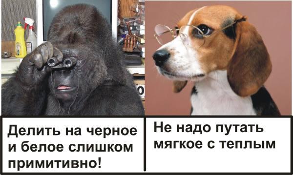 Koko dog clever sm