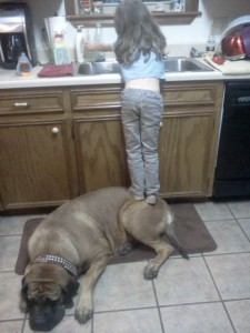 Cooperation - podstavka kid&dog 29914