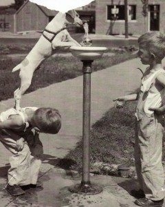 Kids animals - cooperation 385b7be2