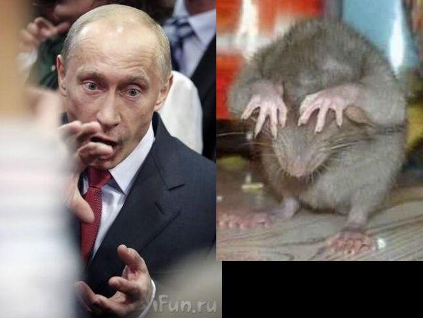 002 Putin - krysa