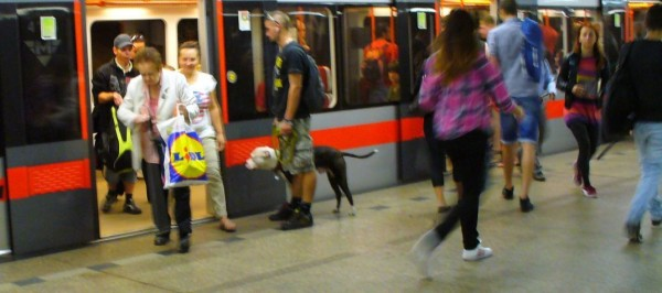 Praha - people - dog P1070035 2014-8