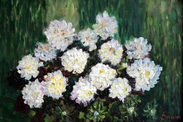 Grandfather chrysanthemums