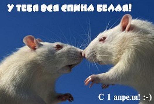 2012-04-01_130657_thumb[2]