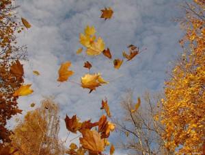 листья1.jpg