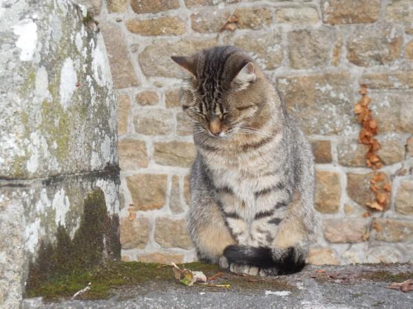 Кошка из аббатства
