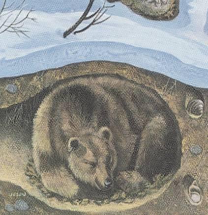 0008-006-ZHilische-medvedja