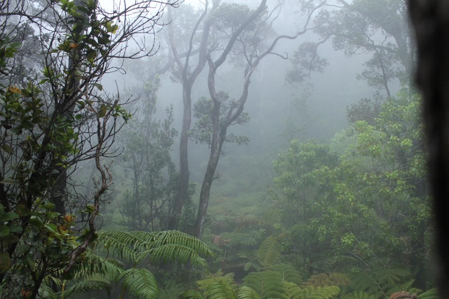 Вулканные окрестности. туман настоящий, пленка не засвечена...