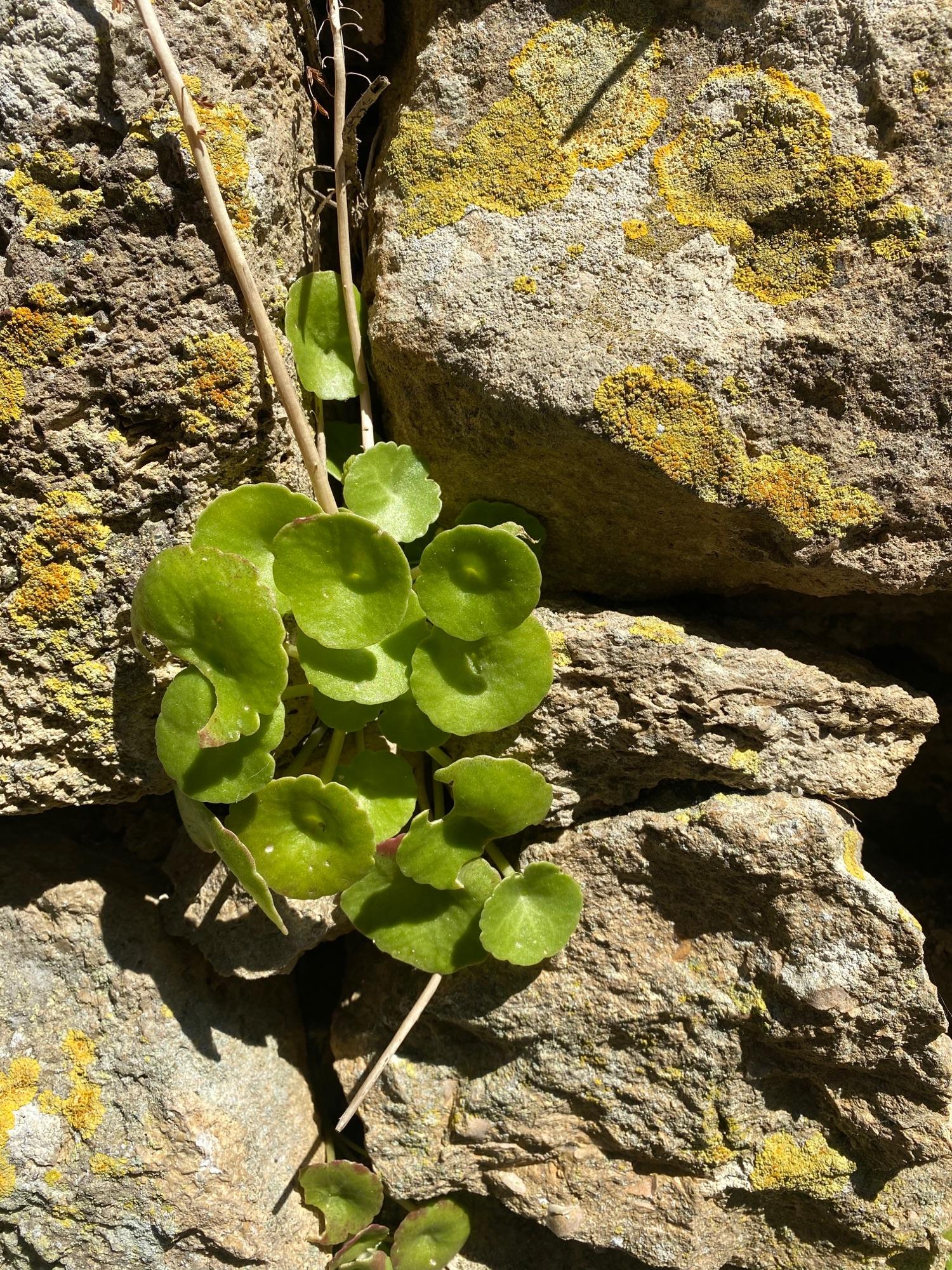 Странные растения на старой стене 10 века