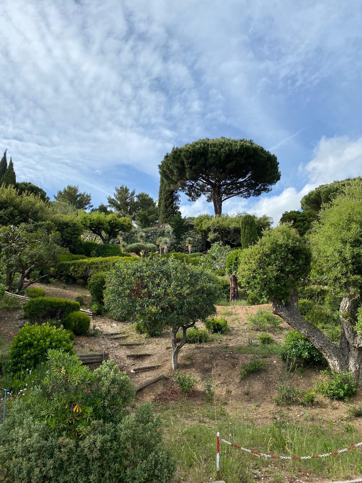 Это мимо этих деревьев римских я прохожу каждый день на прогулке