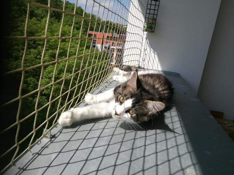 Что делать, чтобы кошки не падали из окон