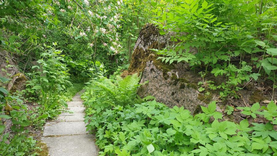 Ботанический сад МГУ