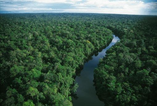 amazon_rainforest_sea_of_green