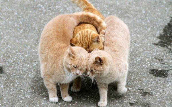 3_cat